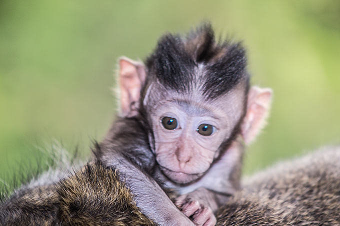 Sacred Monkey Forest, Bali