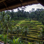 Tips for Enjoying Blissful Bali