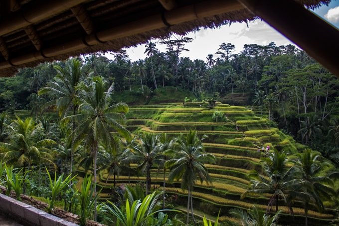 rice-terrace-H
