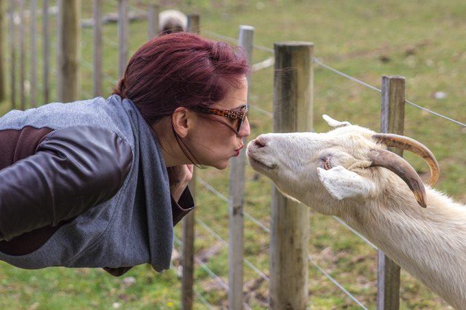 NZ-Kauri-Village-goat-kiss-H