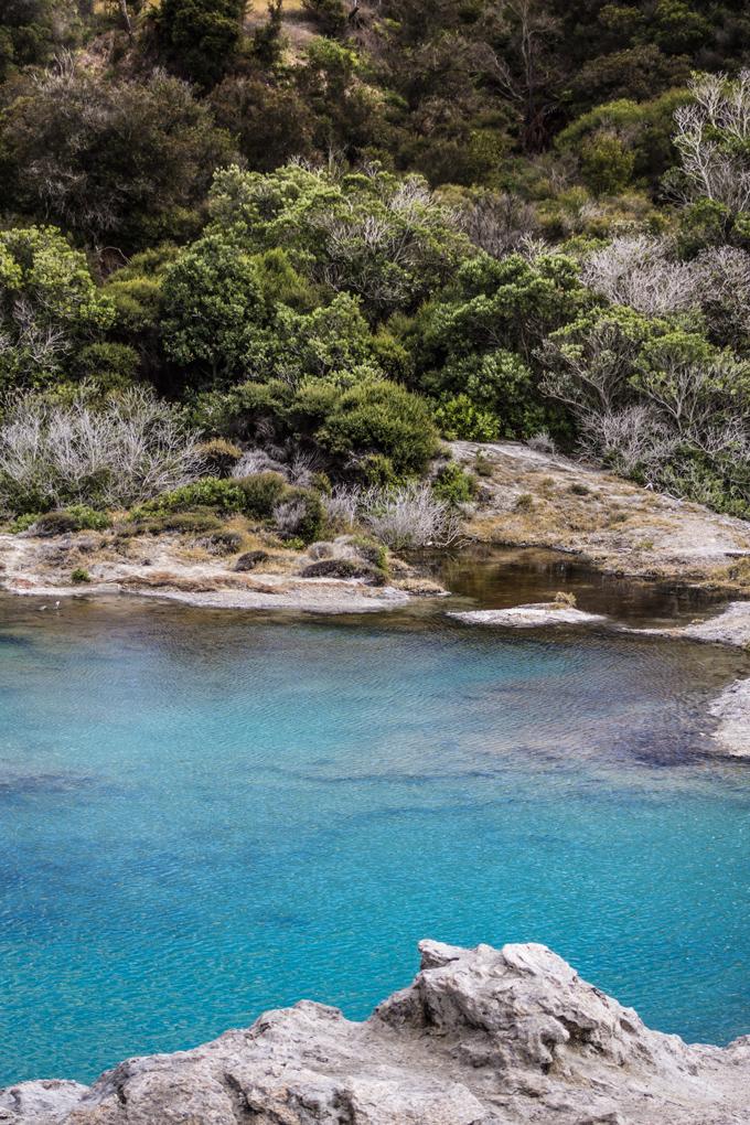 NZ-Rotorua-lake-foliage-V2