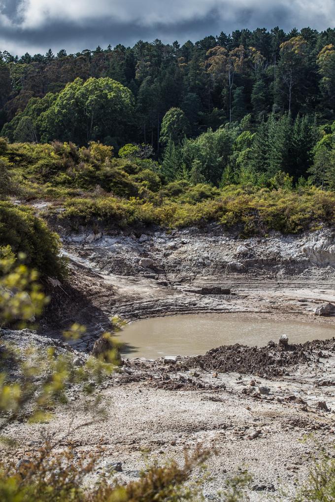 NZ-Rotorua-lake-trees-V