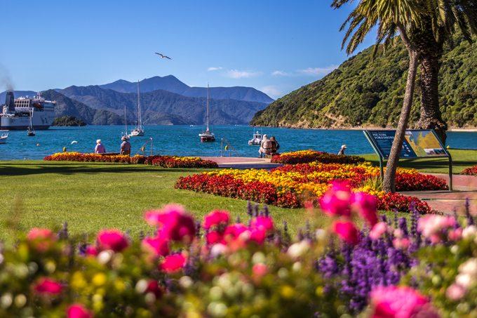 NZ-picton-park-flowers-close-H