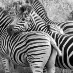 South Africa: Durban City Tour to Zulu Nyala Safari