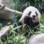7 Things To Do at Ocean Park Hong Kong