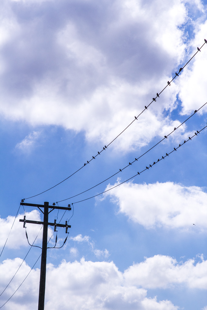 Milan-birds-wire-V