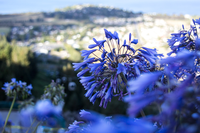 NZ-skyline-flowers-H