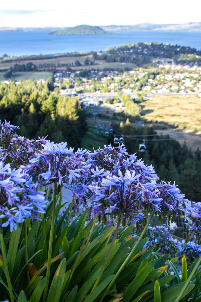 NZ-skyline-flowers-view-H