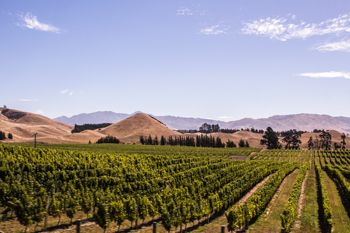 NZ-vineyards-H