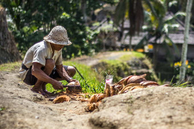 Man chopping coconuts in Bali
