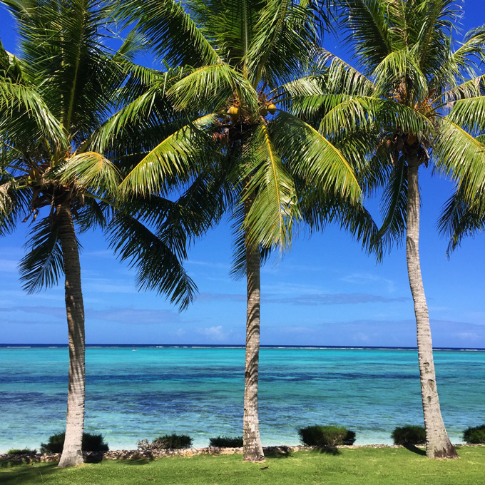 Saipan-palm-trees-Instagram