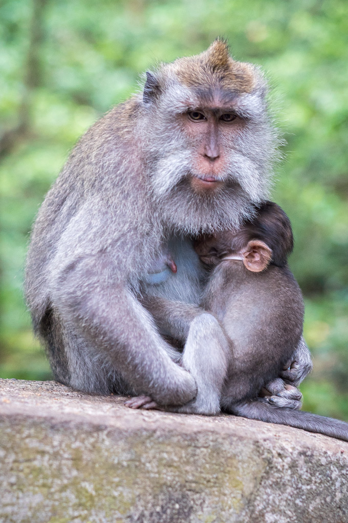 Sacred Monkey Forest Sanctuary, Bali