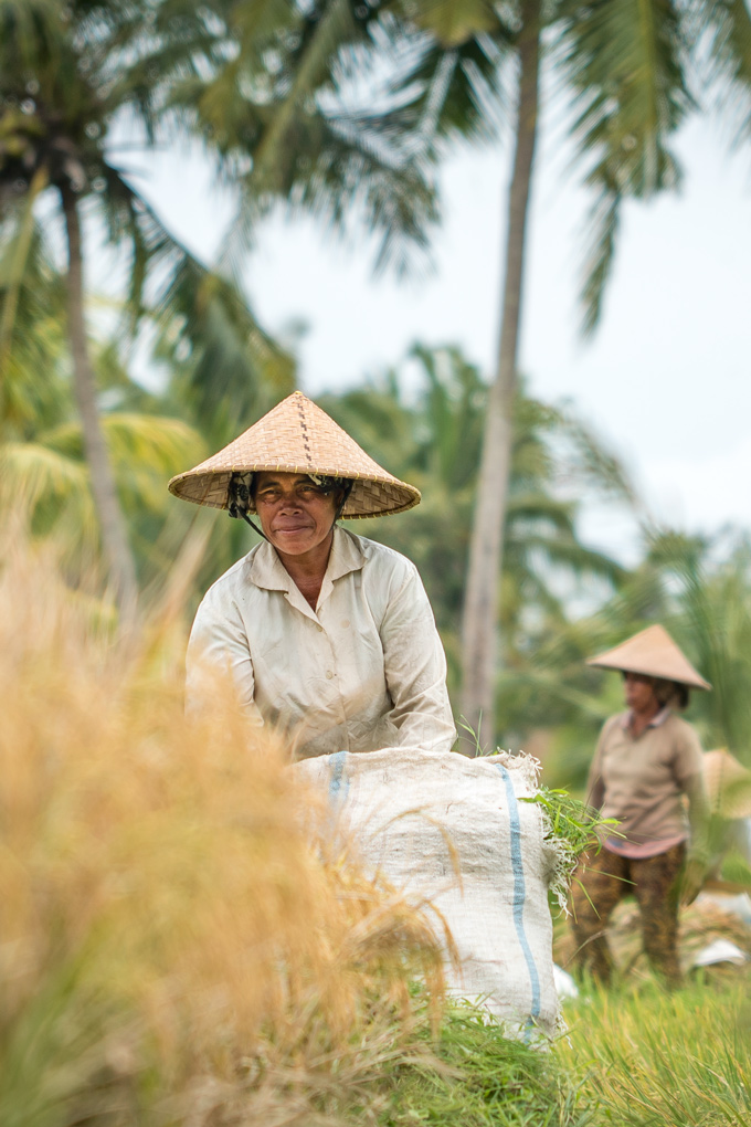 Bali-rice-field-women-V