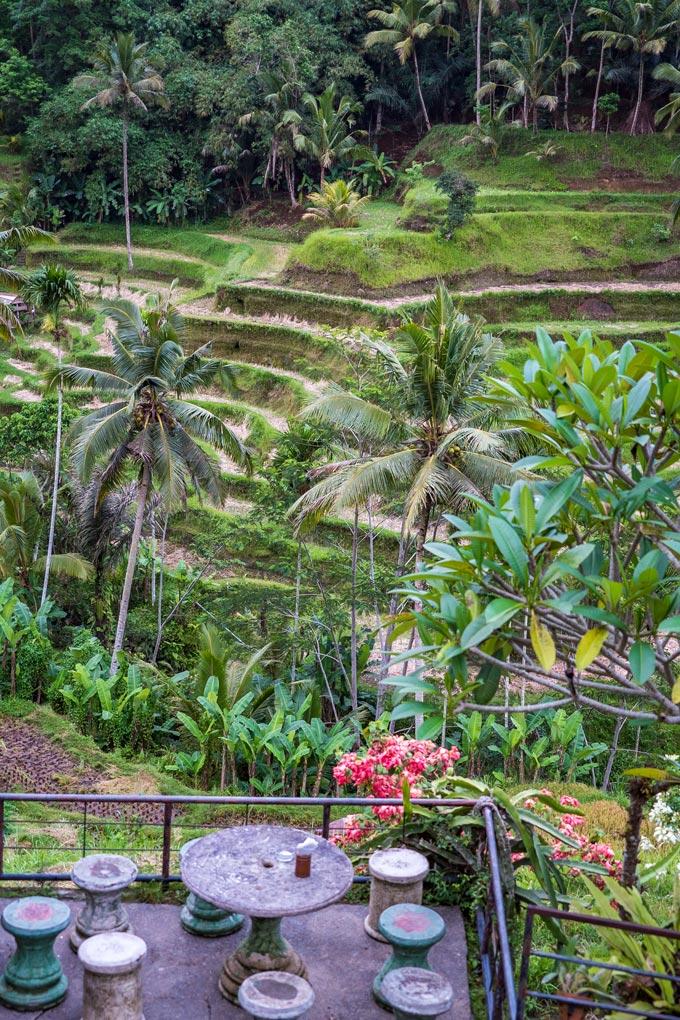 Tegallalang Rice Field, Bali