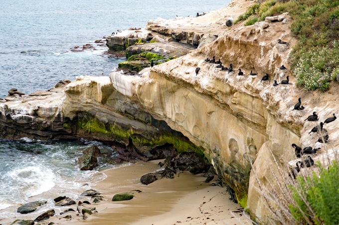 La jolla Cove Beach, California