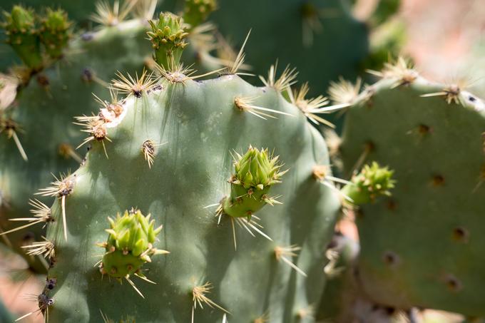az-sedona-cactus-h