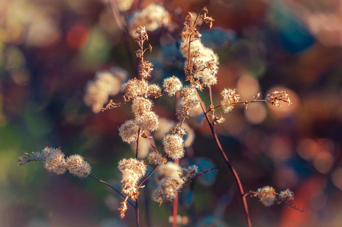asheville-fuzzy-flowers-bokeh-h