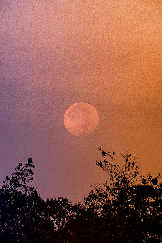 Supermoon over Savannah, Georgia