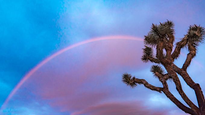 Rainbow sunrise over Joshua Tree National Park, California