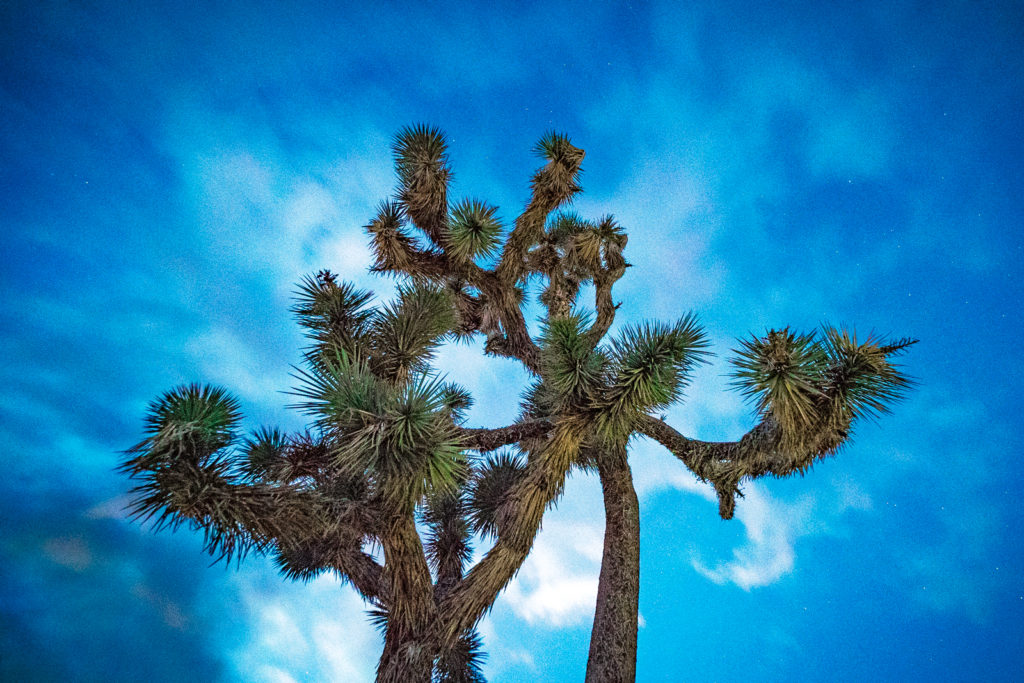 Joshua Tree National Forest Park in California starry sky
