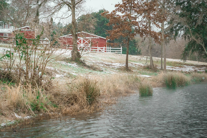 Snow at Red Gate Farms, Savannah, Georgia