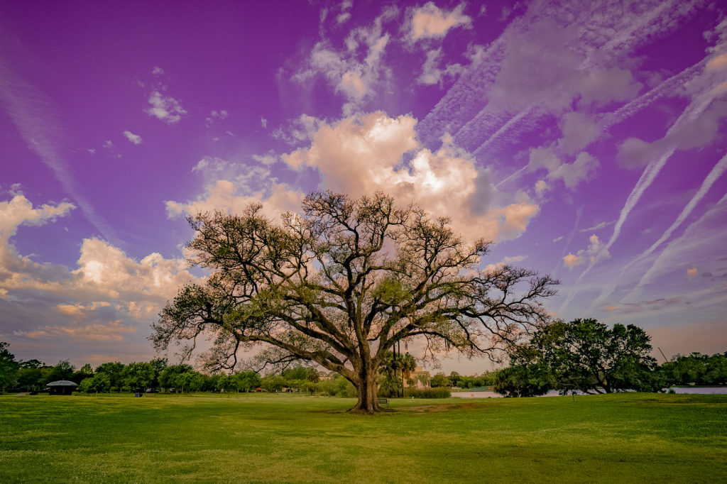 Singing Oak, New Orleans, Louisiana City Park aerial view