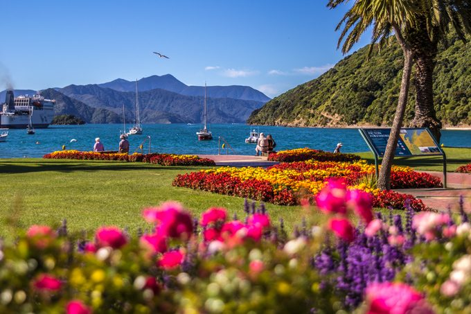 NZ-picton-park-flowers-close-H