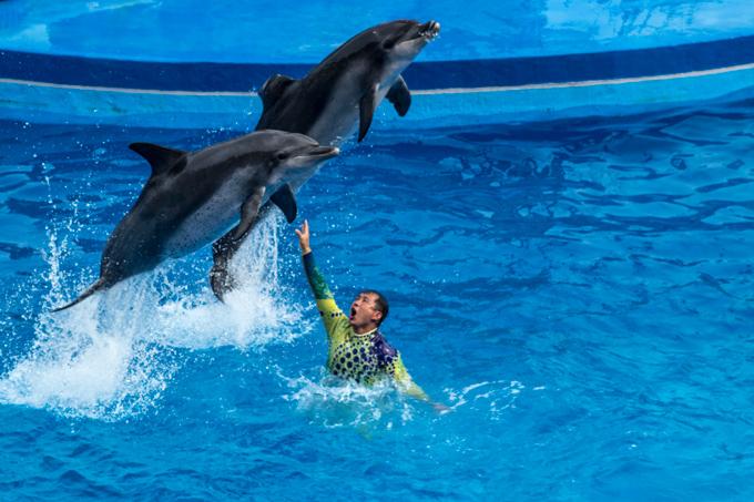 7 Things To Do at Ocean Park Hong Kong - Global Girl Travels
