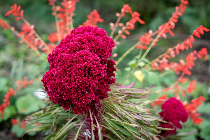 Flowers in Zhangjiajie, China