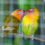 Bali birds
