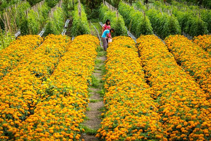 Bali flower field
