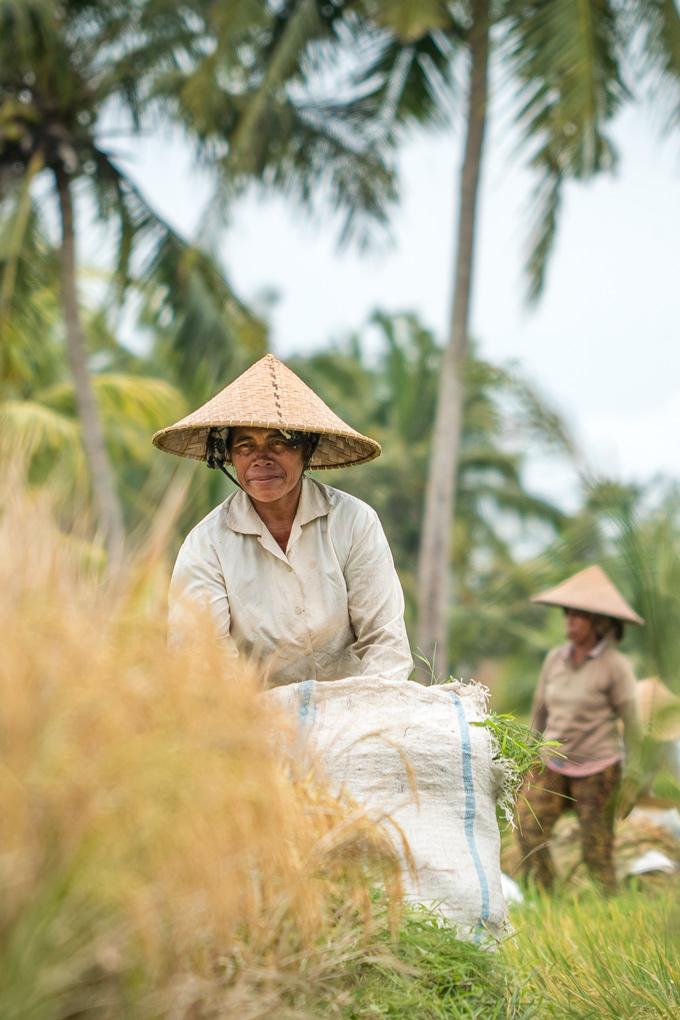 Woman working in rice field Ubud, Bali