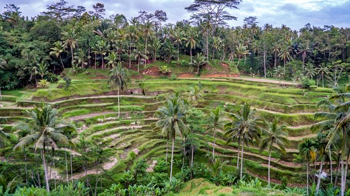 Bali rice terrace Tegallang
