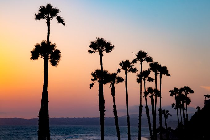 Tall palm trees at sunset in San Clemente, California beach