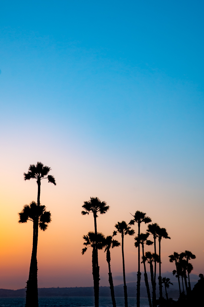 Tall palm trees at sunset in San Clemente, California
