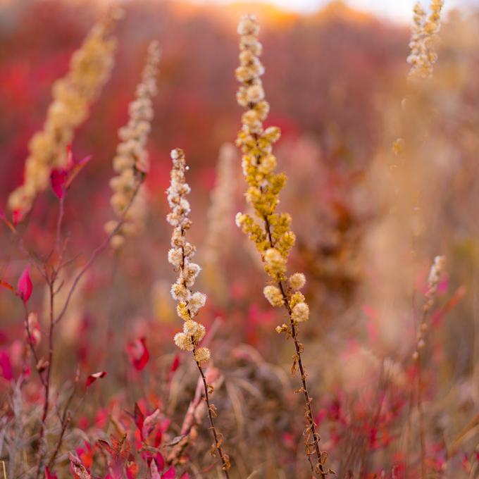 asheville-hike-flowers-sq2