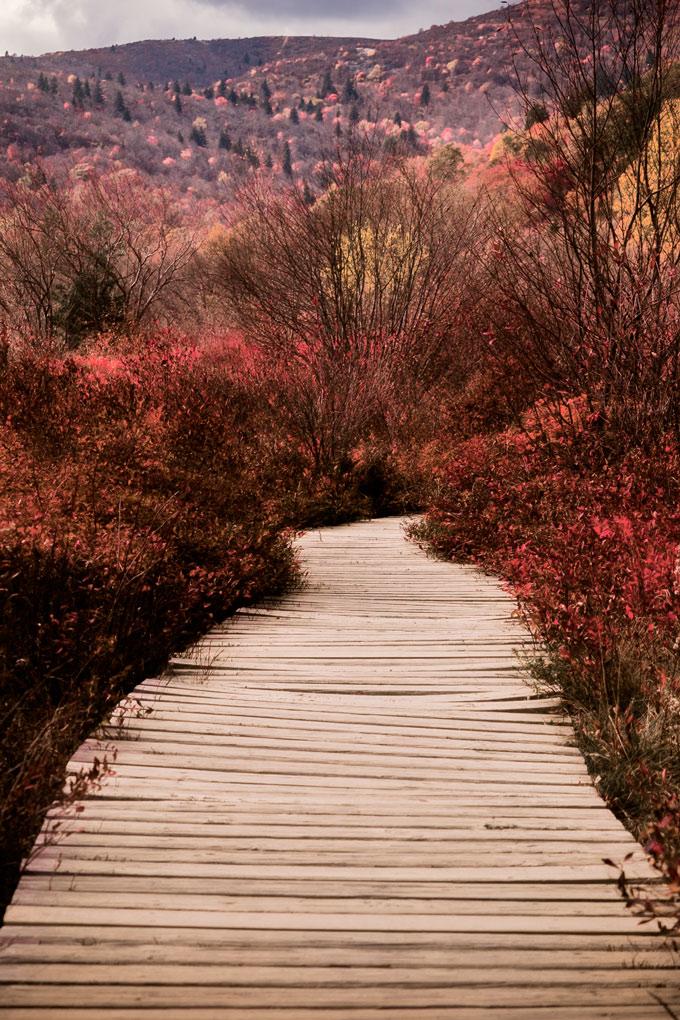Asheville, North Carolina fall autumn foliage