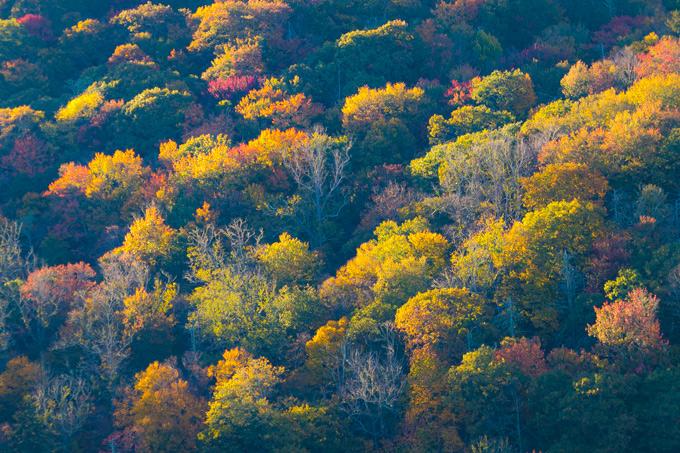 asheville-trees-h