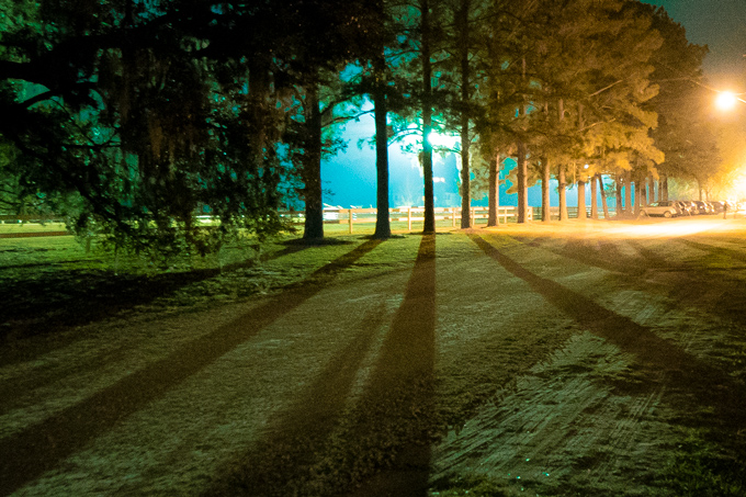 Savannah, Georgia light through trees on a farm at night