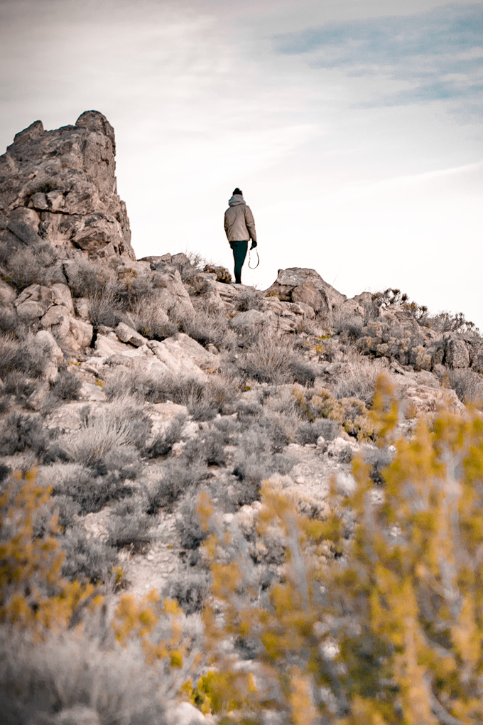 Joshua Tree National Forest Park in California