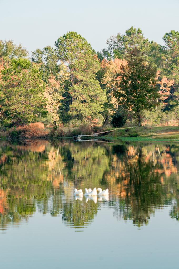 Savannah, Georgia farm