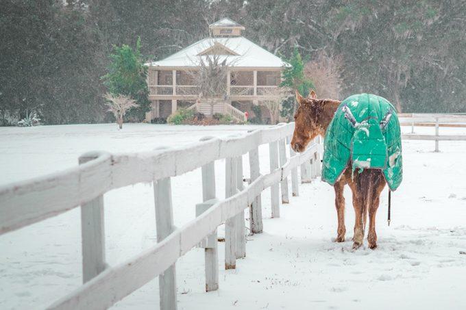 Snow at Red Gate Farms, Savannah, Georgia