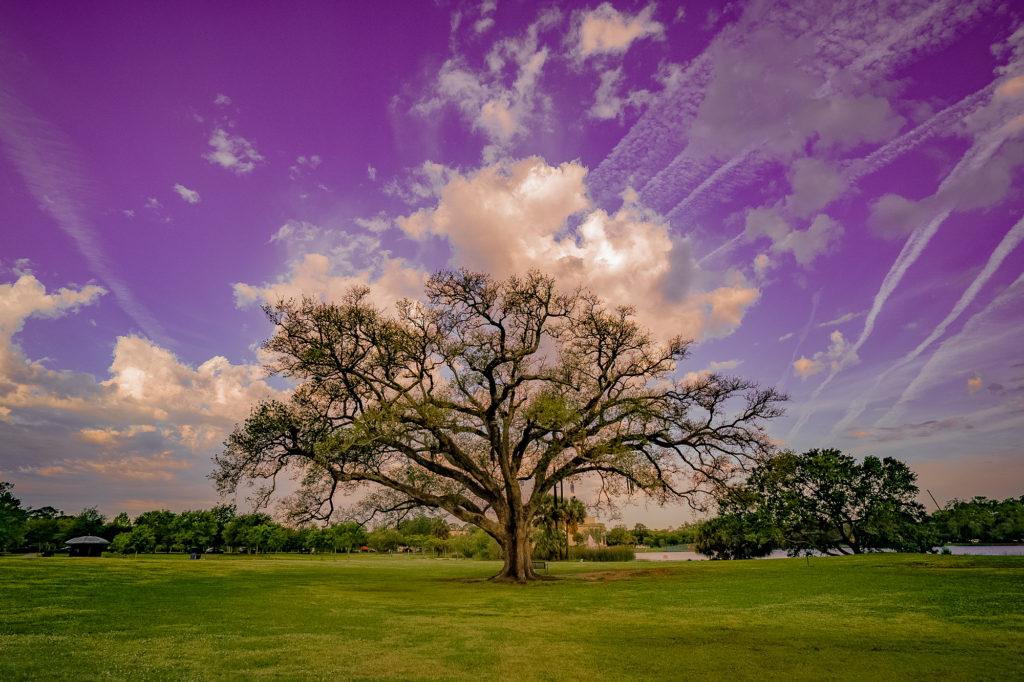 Singing Oak, New Orleans, Louisiana City Park aerial view